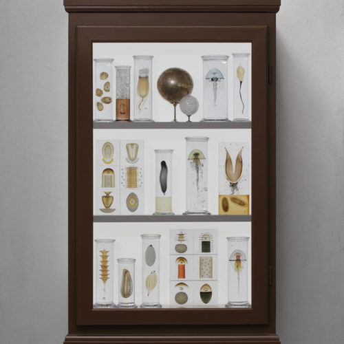 Cabinet of Curiosities by Steffen Dam